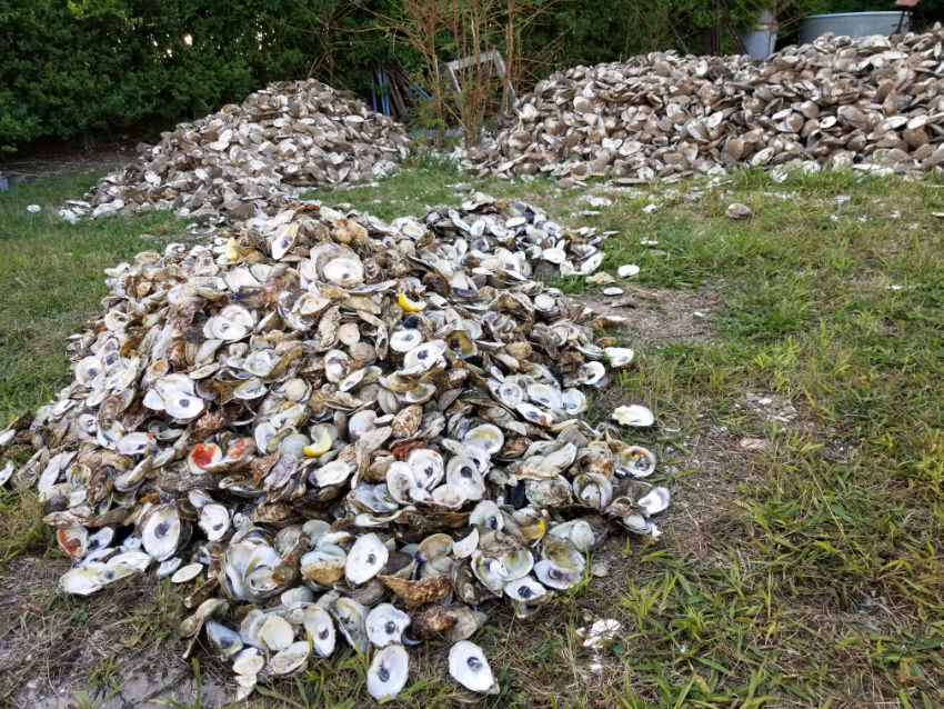 oyster shells 2