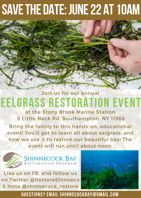 eelgrass flyer